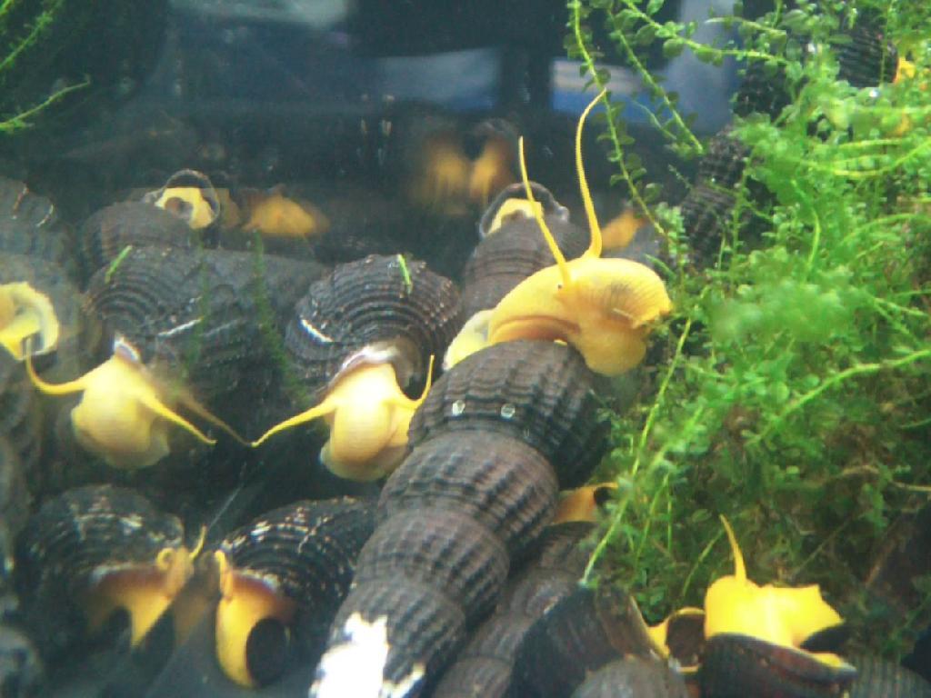 Kaarster fischbottich zierfische aquarium for Aquarium zierfische