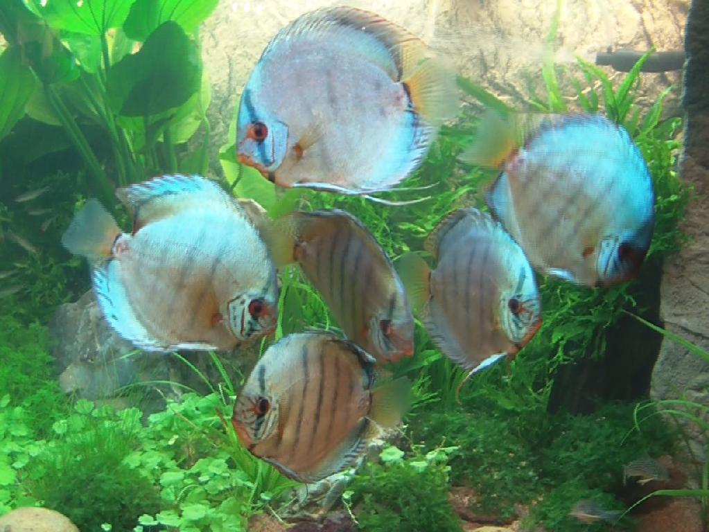 Kaarster fischbottich zierfische aquarium for Zierfische aquarium